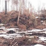 Fallna träd i vårvinden