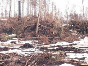 fallna träd mars