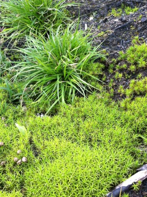 mossa-gräs aug-14